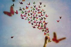 borboletas voando - Pesquisa Google
