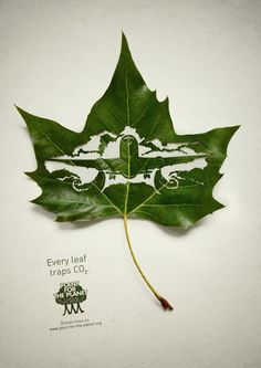 An inspirational ad campaign by Hamburg, Germany based Advertising Agency Legas Delaney for Plant for the Planet, using cut leaves symbolizing their ability to trap CO2.