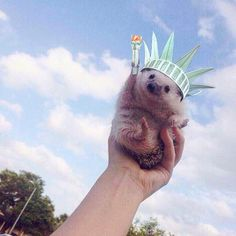 hedgehog lady liberty