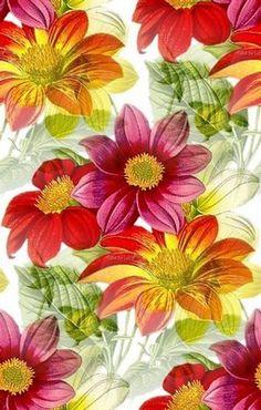 Květ pozadí 58 Plants, Plant, Planets