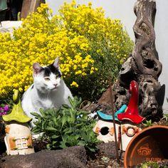 Instagram, Cats, Animals, Photo Shoot, Gatos, Animales, Animaux, Animal, Cat