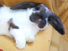 Model Bunny Strikes a Pose - August 14, 2011