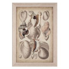 Seashell Collection 1 from Z Gallerie