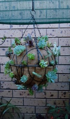 Carefully selected cuttings of succulents in 2 hanging baskets joined together to form into a ball. Hanging Flower Baskets, Hanging Succulents, Succulents Garden, Home Garden Plants, House Plants, Home And Garden, Do It Yourself Crafts, Spring Is Coming, House Front