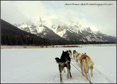 """Dog sledding across Spray Lakes in Alberta, Canada. Find out more at """"Down the Wrabbit Hole - The Travel Bucket List"""". Click the image for the blog post."""