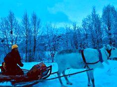 Arctic Alta, 70 grader nord: Syv ting du kan gjøre uten hund i Alta i mars.