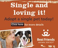 Another adoption promotion idea for pets who can't live with others - Single and Loving It!