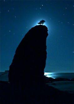 ♂ Darkness Blue moon light silhouette