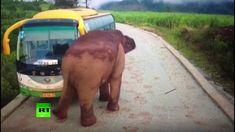 Wildlife vs transport: Elephant attacks vehicles in China