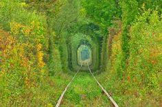 ■愛のトンネル(ウクライナ)  あまりの美しい緑に一瞬絵画と見間違うようなウクライナの人気スポット「愛のトンネル」。恋人同士で手をつないで歩くと願いごとがかなう、シングルの人は愛を見つけることができるなどの伝説があるそうです。