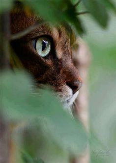 """""""A cat is a lion in a jungle of small bushes."""" —Indian Proverb"""