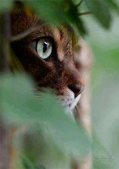 """""""Gli occhi di un gatto sono finestre che ci permettono di vedere dentro un altro…                                                                                                                                                                                 Plus"""