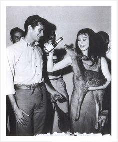 The Nifty Fifties — Audrey Hepburn with her pet deer, Ip.