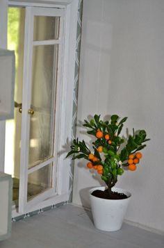 Citrus tree tutorial