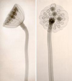 Qi3 botanical print by Joanna Stoga