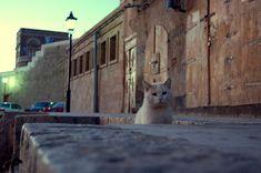 Sana'a cidade velha 世界遺産 サヌア旧市街の画像 サヌア旧市街の絶景写真画像  イエメン