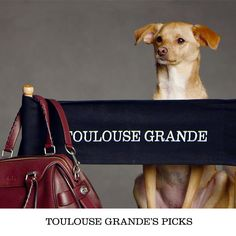 #CoachPups ad campaign featuring Ariana Grande's pup Toulouse