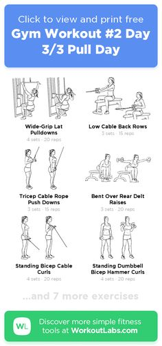 Gym Workout #2 Day 3/3 Pull Day · Free workout by WorkoutLabs Fit