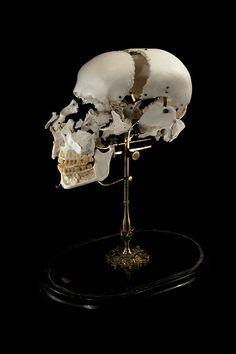 Antique Exploded Skull.Ryan Matthew's Collection. Photo by Sergio Royzen.