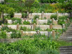 gardening on a hillside | hillside tiered garden | Gardens & Gardening