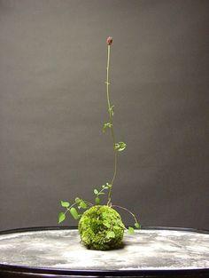 41 Mini Moss Garden Page 14 sur 41 # design # - Mini Jardins Japonais Ikebana, String Garden, Indoor Garden, Indoor Plants, Mini Zen Garden, Art Floral Japonais, Plantas Bonsai, Deco Nature, Decoration Plante