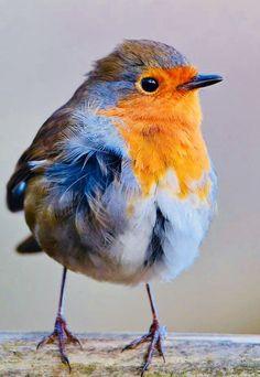 Small Birds, Little Birds, Colorful Birds, Most Beautiful Birds, Pretty Birds, Bird Pictures, Animal Pictures, Beautiful Creatures, Animals Beautiful