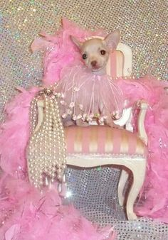 Chihuahua Princess in her Pink World ;o)