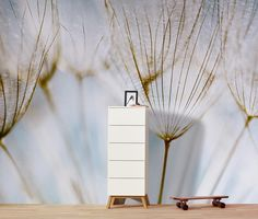 Foto-Tapete »Pusteblume« online bestellen bei Tchibo 316747