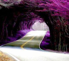 beautiful..beautiful trees.