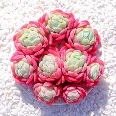 30 Succulents For Green Life - Travelaroundworld Garden Terrarium, Succulent Terrarium, Cacti And Succulents, Planting Succulents, Garden Plants, Indoor Plants, House Plants, Terrariums, Flower Studio
