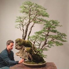 Great Beginner Tips on How to Care for Your Bonsai Tree<