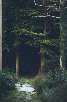 The woods are lovely dark and deep.