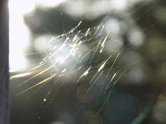 la tejedora de luz