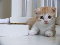 Kittie. 'Nuff said