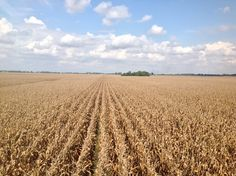 and next year soybeans