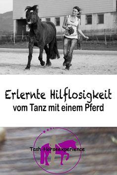 Es gibt sie, diese leisen, braven Pferde....