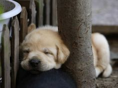 Well tucked puppy