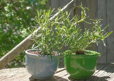 Make a planter from a broken coffee mug. This tute of mine also shows you how to propagate rosemary!