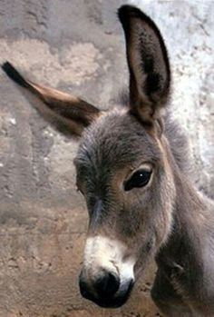 Pledge to save the abused neglected Donkeys.  not for profit charity Sanctuary  http://www.thedonkeysanctuary.ca/about-us
