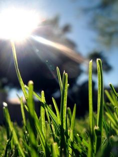 What Household Items Are Used for Lawn Weed Control?