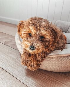 Dog And Puppies Together .Dog And Puppies Together Cute Funny Animals, Cute Baby Animals, Animals And Pets, Funny Dogs, Really Cute Dogs, I Love Dogs, Cute Puppies, Dogs And Puppies, Doggies