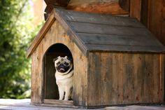 Comment choisir sa niche de chien ?