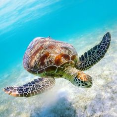 Sea Turtle Pictures, Wild Animals Pictures, Cute Small Animals, Super Cute Animals, Wild Creatures, Ocean Creatures, Baby Sea Turtles, Turtle Baby, Tortoise Tattoo