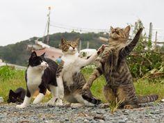 ネコが踊り闘う… 『のら猫拳』 著者インタビュー