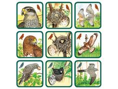 Pexetrio Plus - Znáš naše ptáky? Environmental Studies, Montessori, Card Games, Nature, Homeschool, Crafts For Kids, Projects To Try, Classroom, Birds