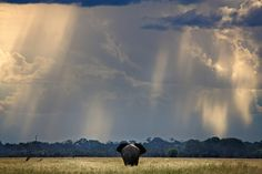 © Kris Ubach y Roberto Iván Cano Parque Nacional de Chobe, Botswana Chobe National Park, National Parks, Amazing Nature, Great Places, Natural Beauty, Remote, Wildlife, Around The Worlds, Country Roads
