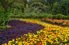 The gardens are vibrant with fall color at the Dallas Arboretum. November is a unique time to come see What's in Bloom thanks to cooler weather.