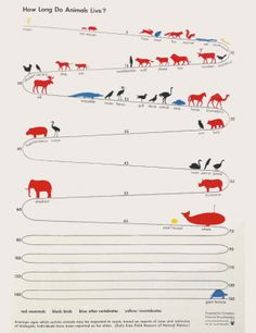 An infographic exploration of animal longevity, from hare-today-gone-tomorrow to near-eternal-tortoises.