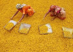 """The price of the turmeric is steadily decreasing. """" In Tamil Nadu, the turmeric sale was conducted in Erode alone. Similarly in northern States, it was conducted in Sangli and Nizamabad. The turmeric Sri Lanka, Maldives, Expo Milano 2015, Indian Colours, Women Life, India Travel, Belle Photo, Turmeric, Beautiful World"""