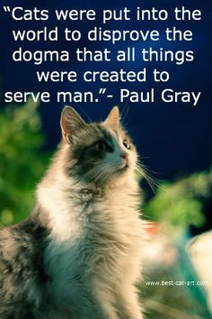 Cats were put into the world to disprove the dogma that all things were created to serve man.
